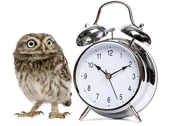 Owl stood next to an alarm clock